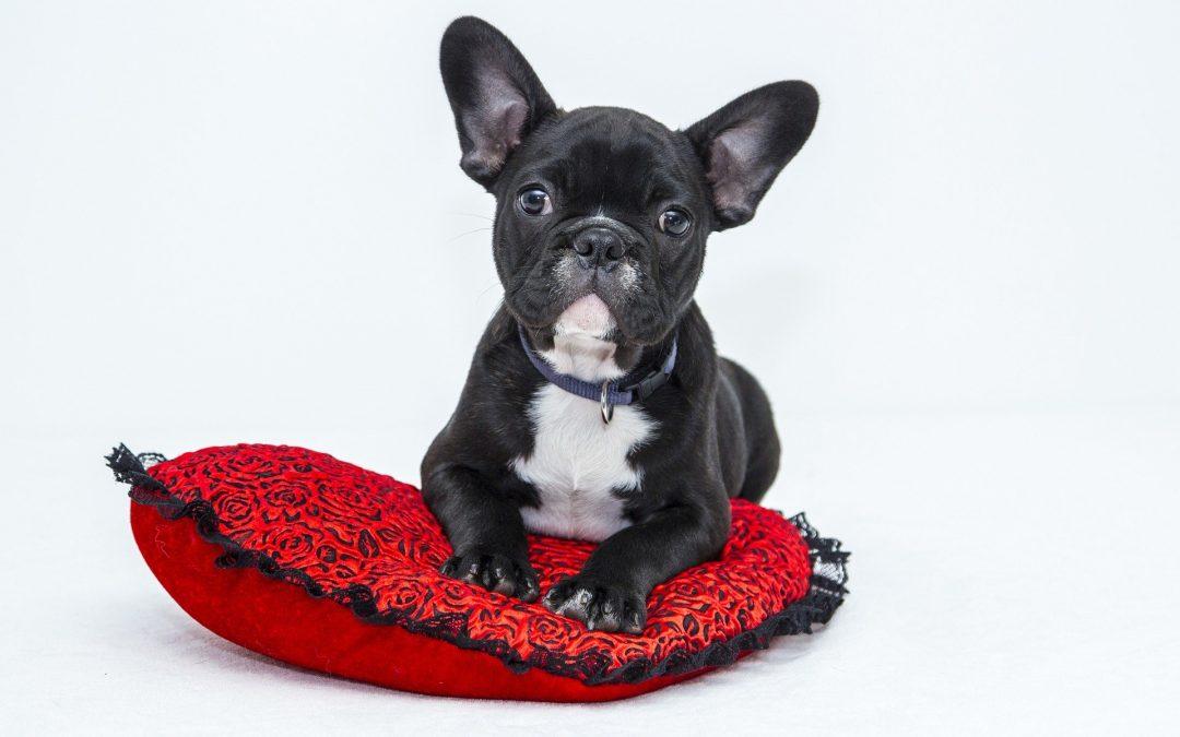 Find den perfekte hundelem til din hund